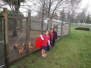 Piwakawaka's Chickens